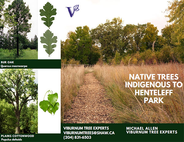 Native Trees Indigenous to Henteleff Park